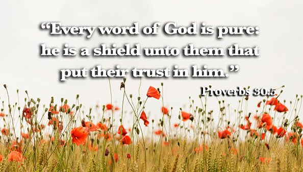 Every word of God is pure: he is a shield unto them that put their trust in him.
