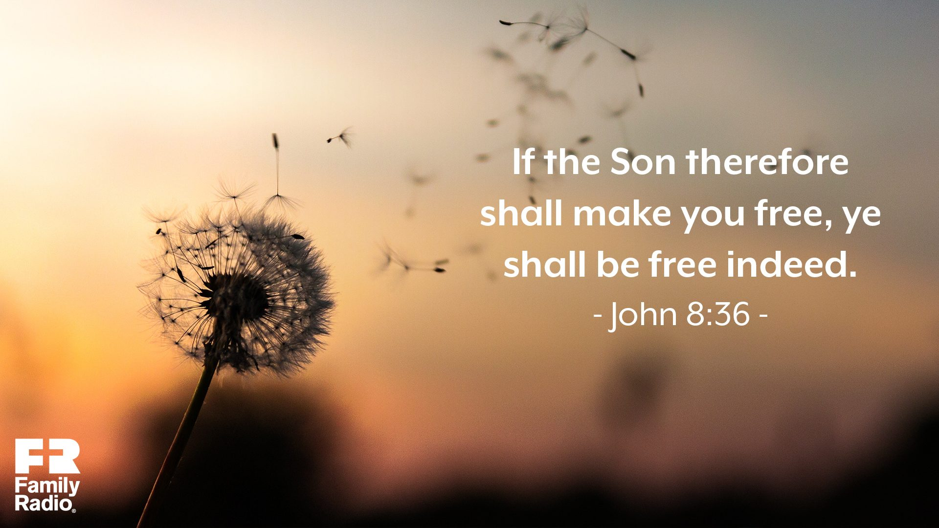 """If the Son therefore shall make you free, ye shall be free indeed."""